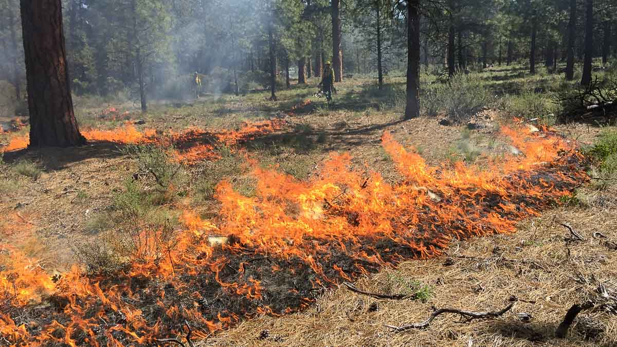 prescribed fire in the deschutes national forest
