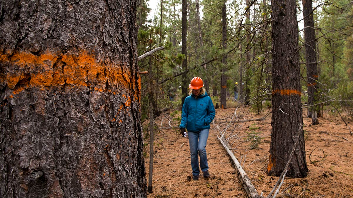forest ecologist forestry professionals central oregon