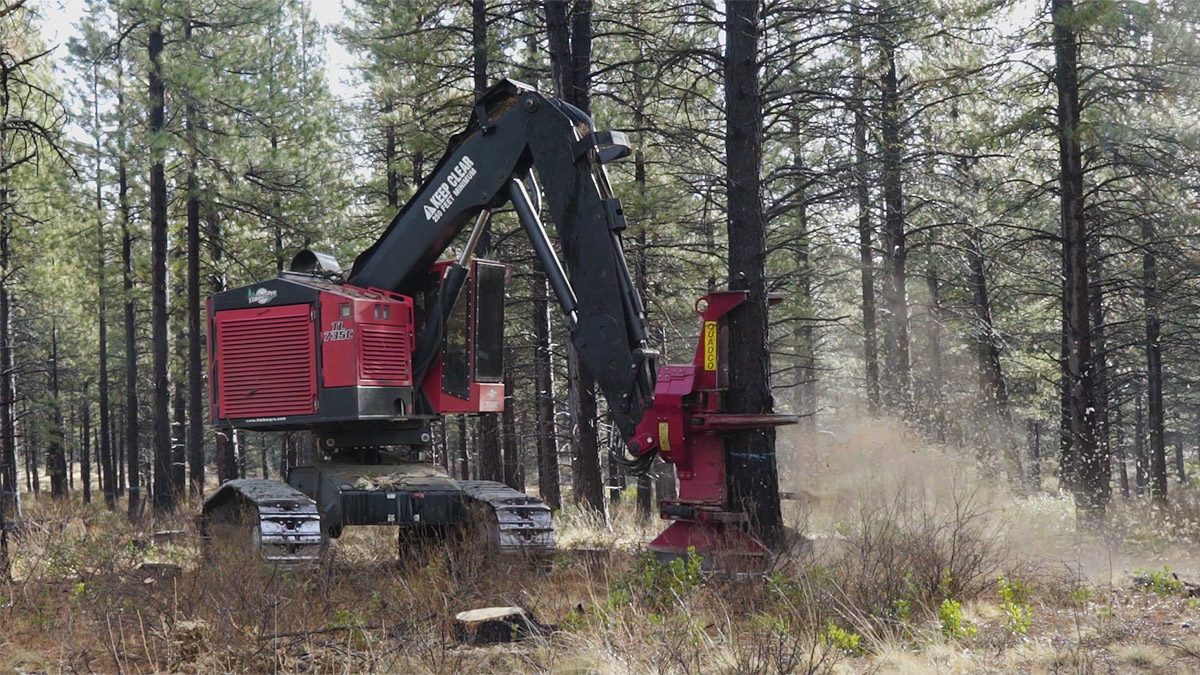 forest restoration thinning mowing